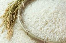 Mejora la calidad del arroz vietnamita en el mercado mundial