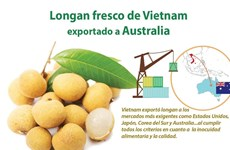 Vietnam exporta longan fresco a Australia