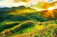 Temporada dorada en arrozales de Mu Cang Chai