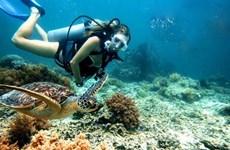 Esfuerzos para proteger arrecifes de coral en península de Son Tra
