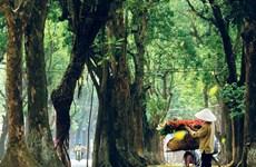 Hanoi, la musa del otoño