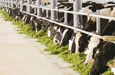 Obtiene Vietnam permiso para exportar leche a China