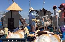 El desarrollo del sector acuícola impulsa la economía marítima de Vietnam