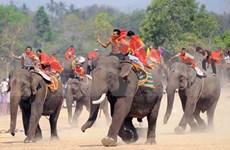 (Video) Carreras de elefantes, festival singular de etnias minoritarias en Vietnam