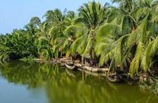 (Video) Coco de Ben Tre: producto agrícola destacado de Vietnam