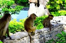 (Video) La isla de los Monos: lugar interesante al visitar la hermosa ciudad de Nha Trang