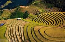 (Televisión) Mu Cang Chai de Vietnam - atractivo destino para viajeros internacionales en 2020