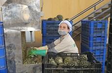 (Fotos) Empresas vietnamitas producen en contexto de pandemia