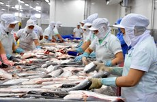 (Televisión) En alza exportaciones de pescado tra vietnamita a Estados Unidos y China