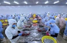(Televisión) En alza exportaciones de camarón de Vietnam a Estados Unidos y Japón