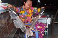 Comercio ilegal de animales salvajes en Vietnam