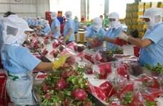 (Video) Diversificación de mercados favorece a industria frutícola de Vietnam
