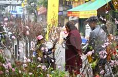 (Video) La compra para el Tet: una tradición especial del pueblo vietnamita