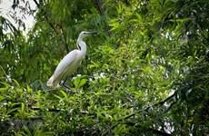 Vietnam clasifica entre países con alta biodiversidad en el mundo