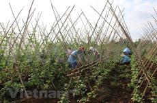 Empresas vietnamitas buscan oportunidades en medio de pandemia