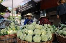 """[Fotos] Provincia promueve divulgación de su especialidad local de anón """"Chi Lang"""""""