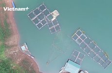 Campesinos se enriquecen gracias a piscicultura semi-salvaje en embalse hidroeléctrico de Hoa Binh