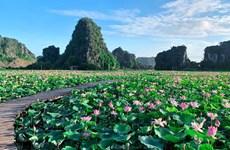 Atrae a visitantes lago de lotos que florecen en medio de otoño