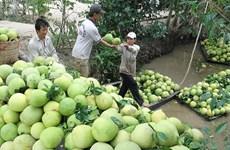 Vietnam y Chile intercambiarán pomelos y cerezas en comercio agrícola