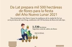 Da Lat prepara mil 500 hectáreas de flores para la fiesta del Año Nuevo Lunar 2021
