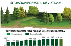 Situación forestal de Vietnam en los últimos años