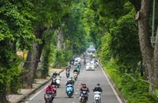 Impulsan en Vietnam campaña de plantación de árboles