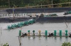 Desarrollan producción acuícola de la provincia vietnamita de Tien Giang