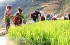 Vietnam refuerza lucha contra riesgos de trabajo infantil a causa de COVID-19