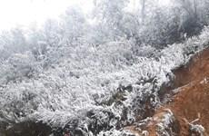 Congelamiento azota zonas montañosas norteñas de Vietnam