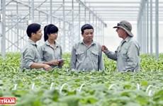 """Agricultura limpia en el """"jardín"""" de la empresa vietnamita VinEco"""