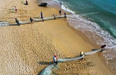 Contemplar un día de trabajo de los pescadores vietnamitas de Da Nang