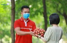 Impulsan venta de lichi en plataforma de e-comercio de Vietnam
