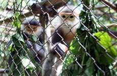Protección de biodiversidad en Vietnam, tarea de toda la comunidad