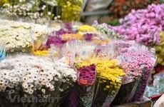 Revitalizado el mayor mercado de flores de Hanoi por el Día Internacional de la Mujer