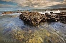 [Fotos] Belleza del arrecife de coral en Hon Yen, provincia de Phu Yen, en el sur del centro vietnamita