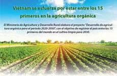 [Info] Vietnam se esfuerza por estar entre los 15 primeros en la agricultura orgánica