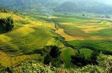 [Foto] Diferentes tonos de color amarillo en temporada de cosecha de arroz en Mu Cang Chai