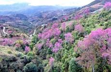 [Foto] Belleza de Mu Cang Chai en la primavera