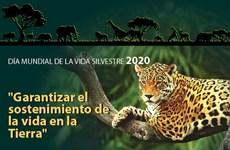 [Info] Día Mundial de la Vida Silvestre 2020