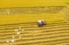 [Foto] Abundante cosecha Invierno-Primavera de 2019-2020 de arroz en Delta del Mekong