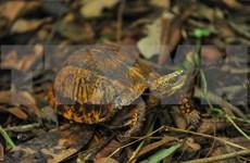 [Foto] Centro de Conservación de Tortugas en Parque Nacional de Cuc Phuong