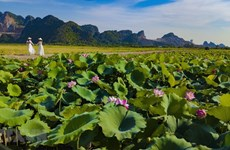 [Foto] Temporada de floración de lotos en Ninh Binh