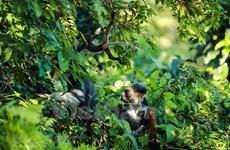 [Foto] Vida de primate en península de Son Tra