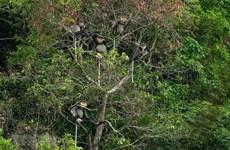[Foto] Kon Tum: biodiversidad en el parque Kon Plong