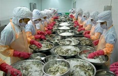 Productores vietnamitas de camarones por desarrollar a largo plazo