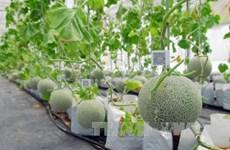 Vietnam promueve aplicación de biotecnología en agricultura