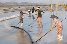 Buscan recuperar industria salinera en provincia vietnamita de Nam Dinh
