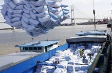 Cosecha de buenas noticias para el arroz vietnamita