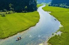 Ninh Binh: Impresionantes campos de arroz en el periodo de cosecha en Tam Coc