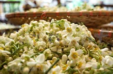 Cómo hacer el té aromatizado con flores de pomelo al estilo hanoyense